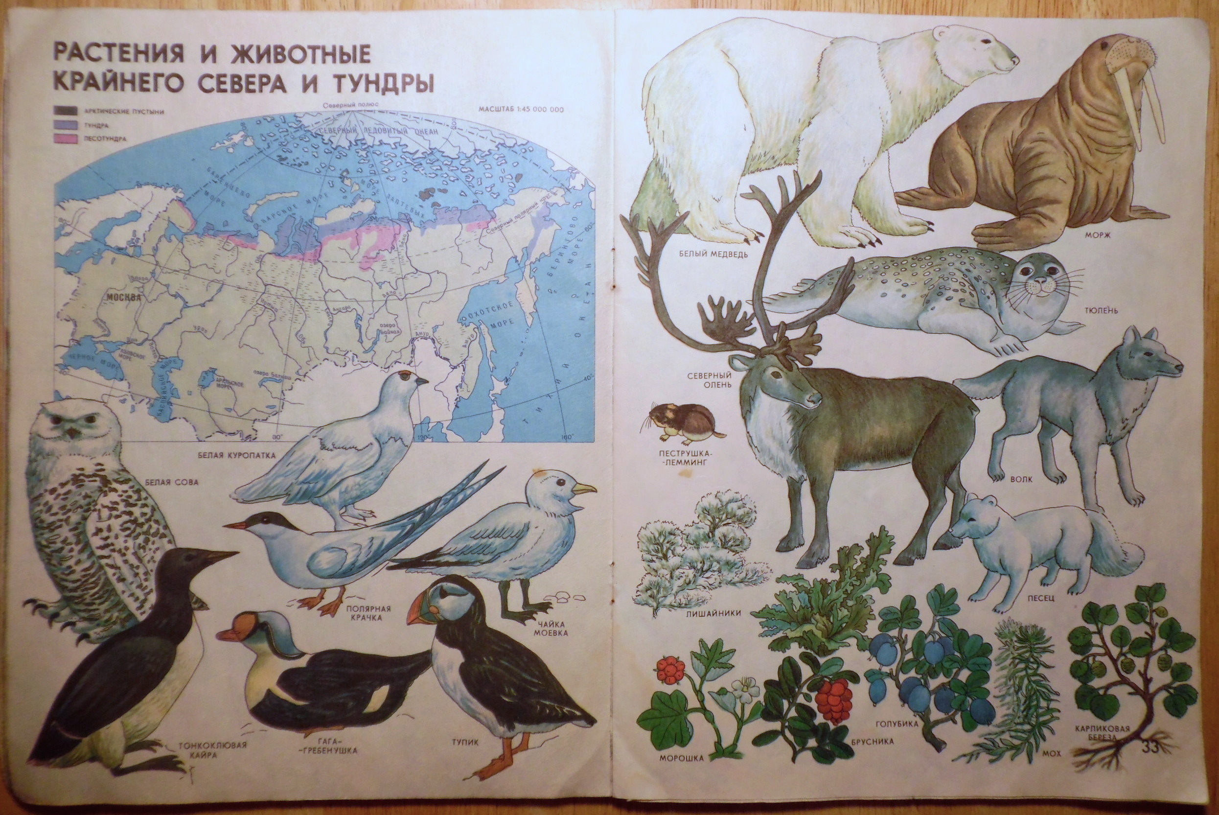 Plants and Animals of the Far North and the Tundra
