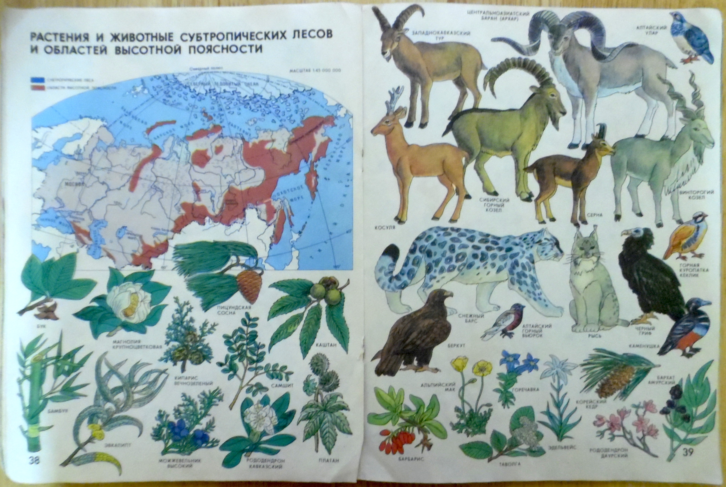 Plants and Animals of Subtropical Forests and Regions of High Elevation